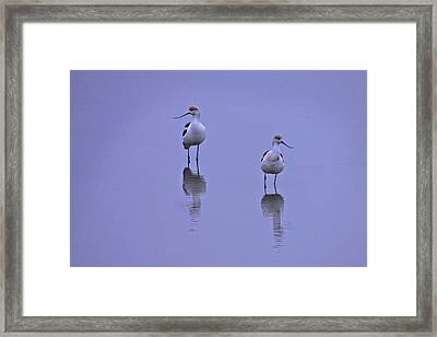 World Of Their Own Framed Print by Laura Ragland