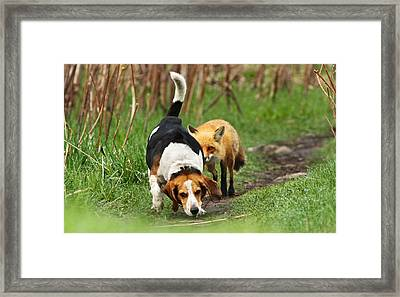 World\\\'s Worst Hunting Dog Framed Print by Mircea Costina