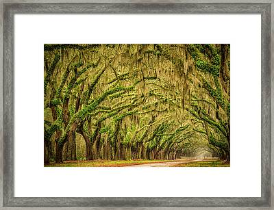 Wormsloe Drive Framed Print by Phyllis Peterson