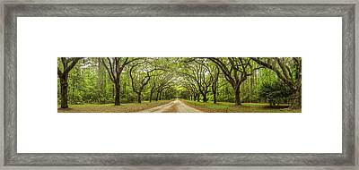Wormsloe Path Framed Print