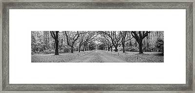 Framed Print featuring the photograph Wormsloe Pathway by Jon Glaser