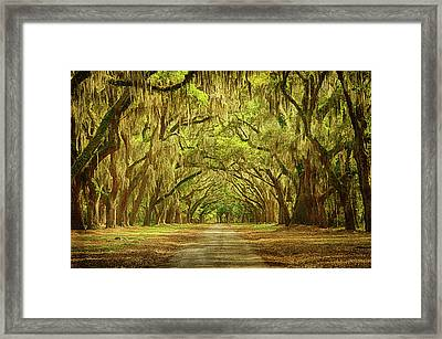 Wormsloe Plantation Oaks Framed Print by Priscilla Burgers
