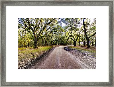 Framed Print featuring the photograph Wormsloe Road by Anthony Baatz