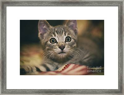 Worried Little Eyes Framed Print by Alessandro Giorgi Art Photography