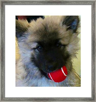 Framed Print featuring the photograph Would You Like To Play? by Laura Wong-Rose
