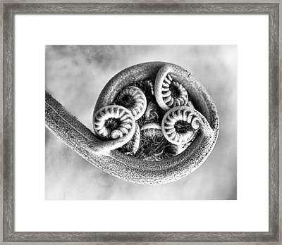 Wound Up Tight In Bw Framed Print