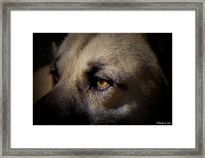 Framed Print featuring the photograph Wounded by Betty Northcutt