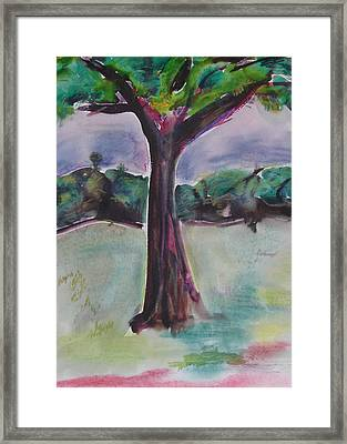 Wounded Tree Framed Print by Rima Bidkar