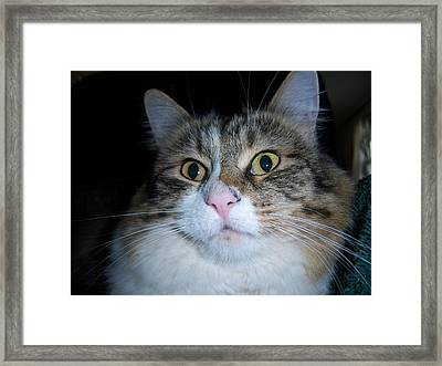 Wow  Framed Print by Ken Day