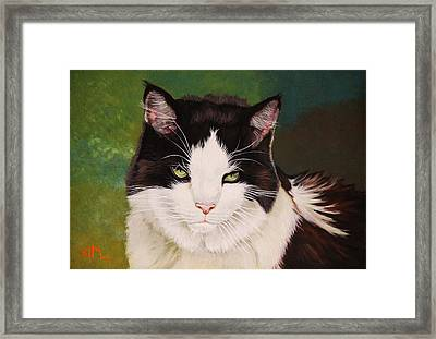 Wozzle - Domestic Cat Framed Print