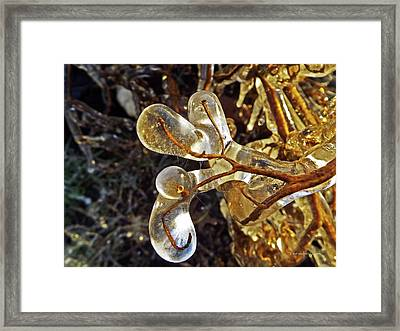 Wrapped In Ice Framed Print