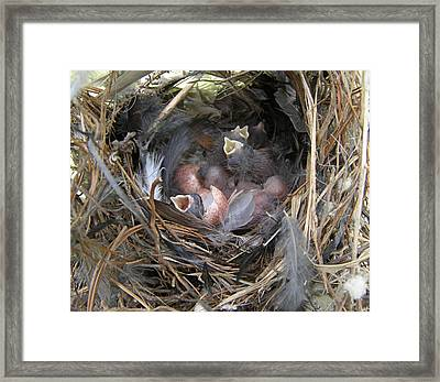 Framed Print featuring the photograph Wren Babies by Angie Rea