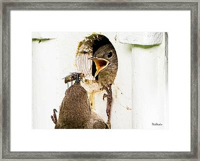 Wren Breakfast Framed Print