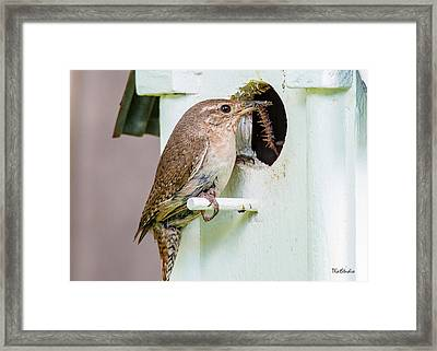 Wren Bringing Home The Bacon Framed Print