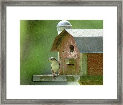 Framed Print featuring the photograph Wren by John Hix