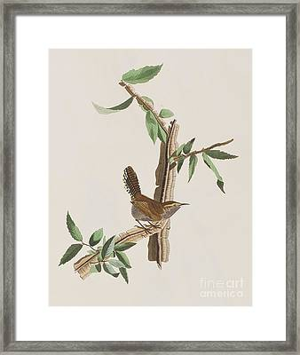 Wren Framed Print by John James Audubon