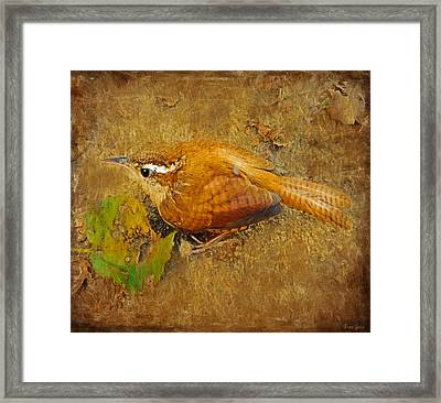 Wren Song Framed Print by Anna Louise