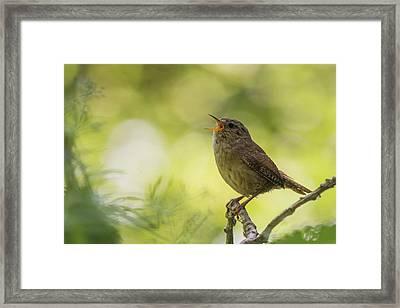 Wren Framed Print