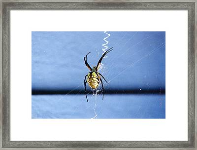 Writing On The Web Framed Print by Renee Cain-Rojo