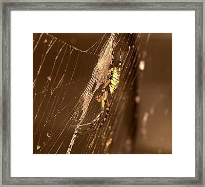Writing Spider Framed Print