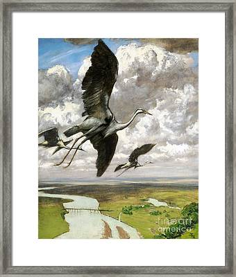 Wundervogel Framed Print by Pg Reproductions