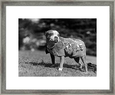 Wwi, Sergeant Stubby, American War Dog Framed Print