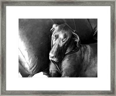 Wyatt In The Recliner Framed Print