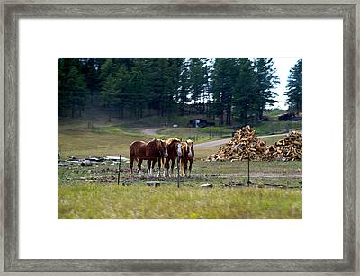 Wyoming 3 Horses On The Ranch Framed Print by Thomas Woolworth