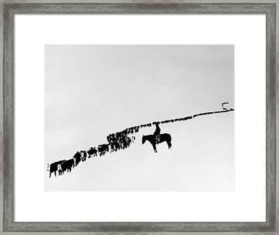 Wyoming: Cattle, C1920 Framed Print by Granger