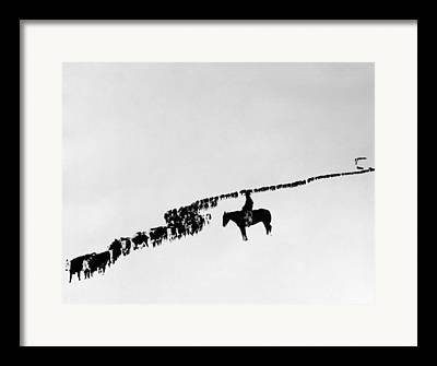 Carousel Horse Framed Prints