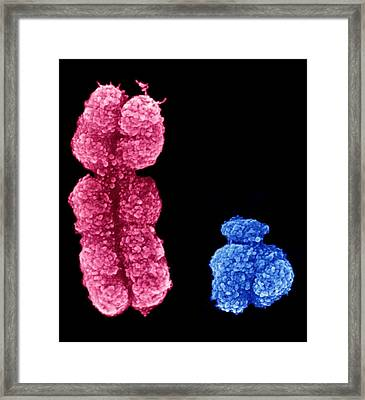 X And Y Chromosomes Framed Print by