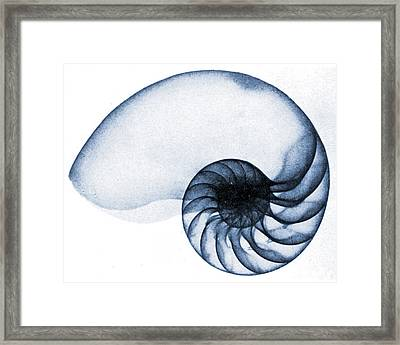 X Ray Of A Nautilus Framed Print