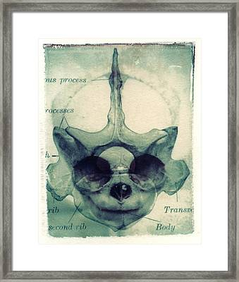 X Ray Terrestrial No. 13 Framed Print by Jane Linders