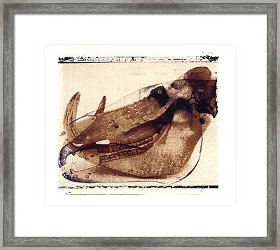 X Ray Terrestrial No. 6 Framed Print by Jane Linders