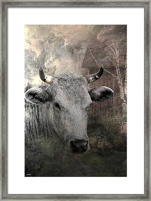 Thee Old Cow Framed Print