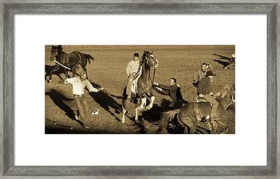 Xtreme Bronc Riding Framed Print by Caitlyn Grasso