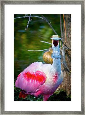 Ya Don't Say Framed Print by Mark Andrew Thomas