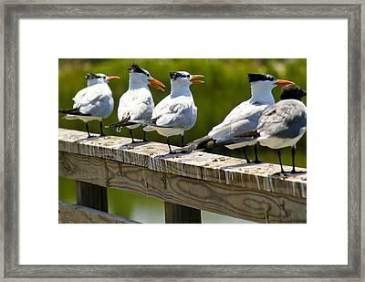 Yackety Yackety Framed Print by Marilyn Hunt