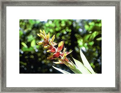 Yado Framed Print