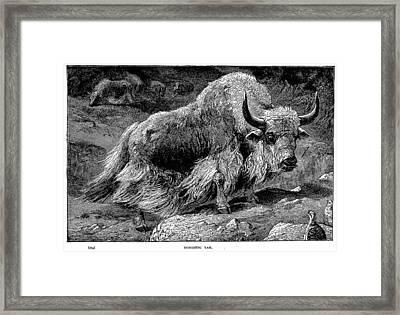 YAK Framed Print by Granger