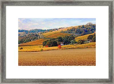 Yamhill Valley Vineyards Framed Print by Margaret Hood
