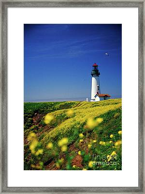Yaquina Head Lighthouse- V2 Framed Print