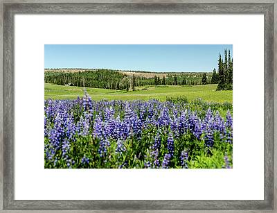 Yard Full Of Wildflowers Framed Print