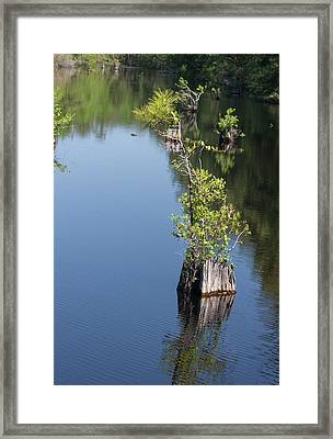 Framed Print featuring the photograph Yawkey Wildlife Refuge - Cat Island by Suzanne Gaff