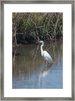 Framed Print featuring the photograph Yawkey Wildlife Refuge - Great White Egret II by Suzanne Gaff