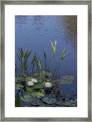 Framed Print featuring the photograph Yawkey Wildlife Reguge Water Lilies With Rare Plant by Suzanne Gaff