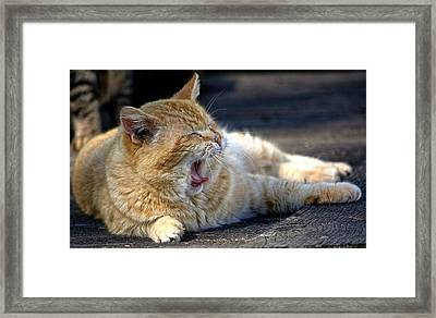Framed Print featuring the photograph Yawning by Chriss Pagani