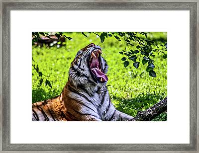 Framed Print featuring the photograph Yawning Tiger by Joann Copeland-Paul