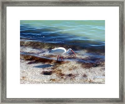 Yay Seaweed Framed Print by Elizabeth Klecker