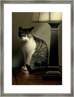 Year Of The Cat Framed Print by Diana Angstadt